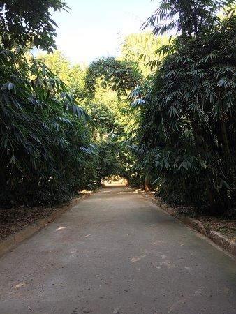 Algiers, Algieria: Le Jardin d'Essai du Hamma