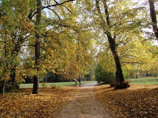 Centro, França: Parco in autunno