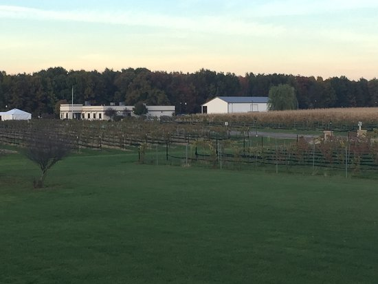 Berlin Center, OH: View from back porch of the Mastropietro Winery