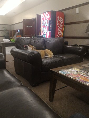 Athabasca, Canada: The manager/owners dog that roams through the hotel.