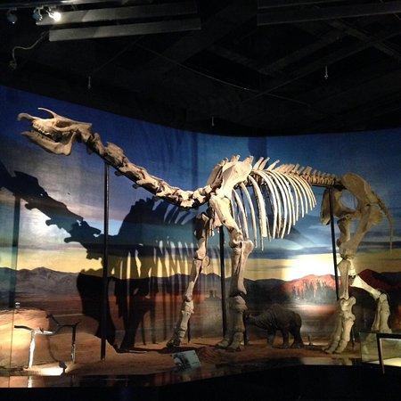 Turpan, Kina: Dino