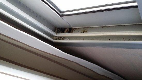 Prefailles, France: La fenêtre de l'intérieur... un vrai garde-manger !