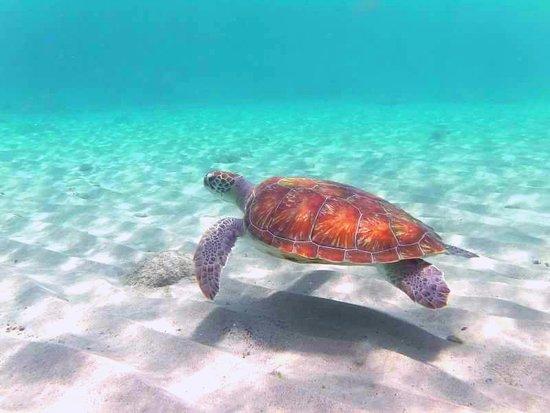 Karibik Urlaub Curacao