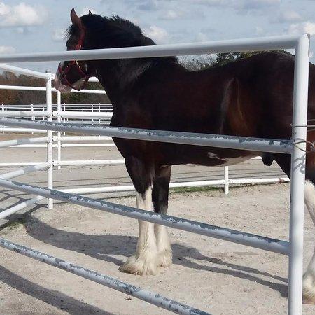 Boonville, MO: Stallion