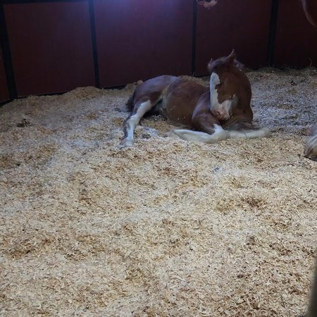 Boonville, MO: Foal