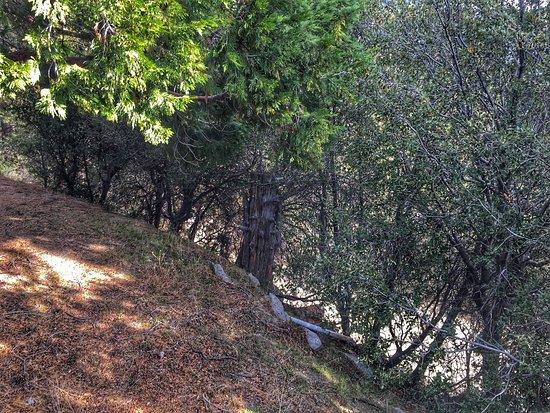 Idyllwild, CA: October 31, 2016