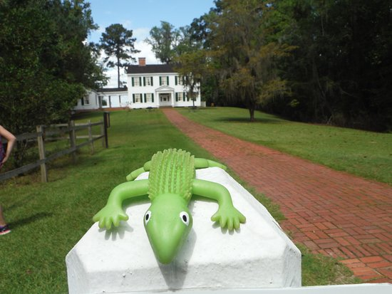 Bristol, FL: Back of Gregory House with Leroy my daughters lizard toy.