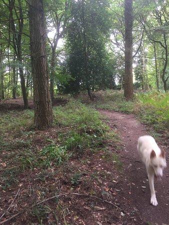 Forest of Dean ภาพถ่าย