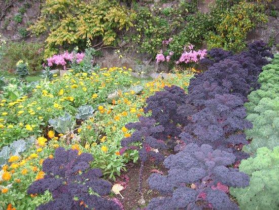 Poolewe, UK: Inverewe kale in autumn