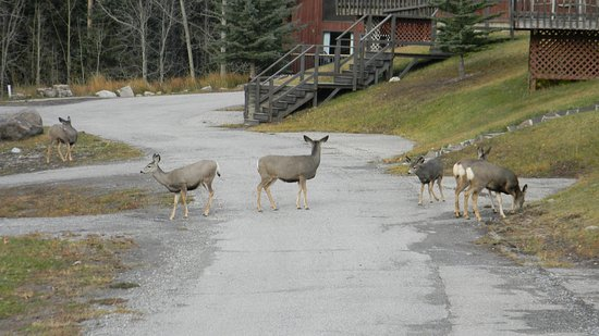 Dead Man's Flats, Canada: local wildlife