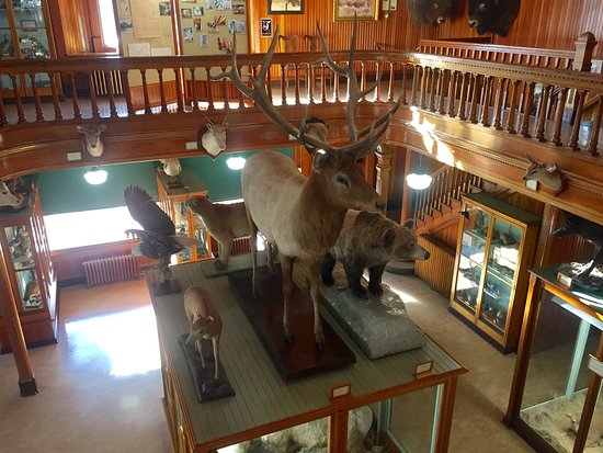 Banff Park Museum: photo3.jpg