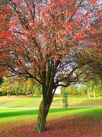 Bolton, UK: Autumn in Queens Park