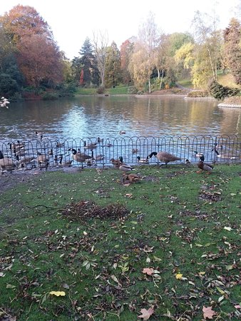 Bolton, UK: Duck Pond
