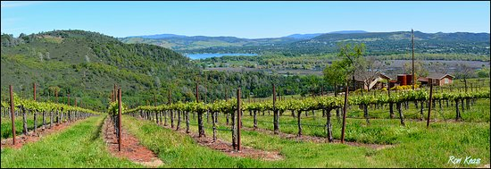 Lower Lake, CA: Vineyards and Views!