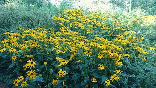 Naaldwijk, Nederland: Flowers in butterfly garden