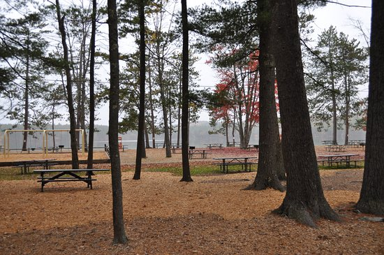 Tamworth, NH: picnic area under the pines