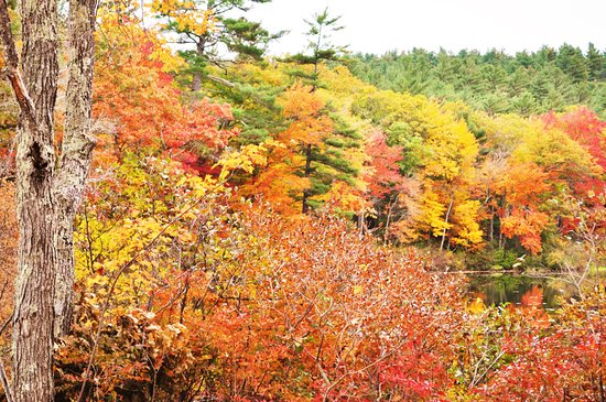 Chocorua, NH: pretty fall colors