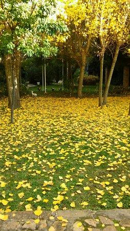 Fuencaliente, España: Jardín