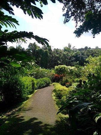 Petit-Bourg, Guadeloupe: IMG_20161023_112235_large.jpg