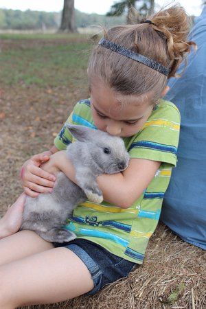Monticello, FL: Loving the bunny
