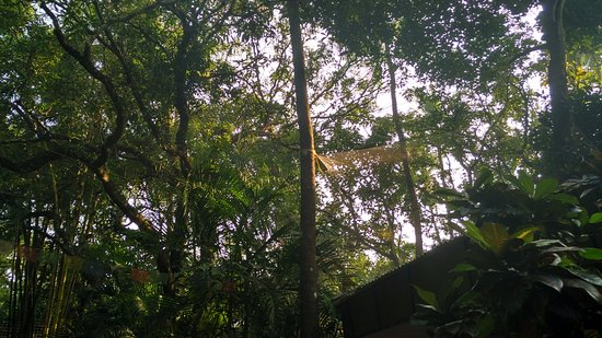 Anjuna, Indien: View of the trees in their Property