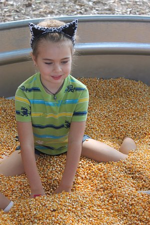 Monticello, FL: Playing in the corn