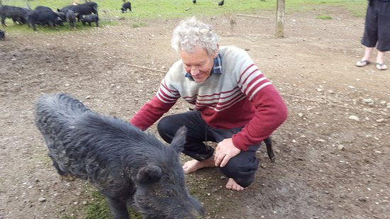 Coromandel Peninsula, Selandia Baru: Stu and a wild sow.