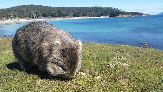 แทสมาเนีย, ออสเตรเลีย: Maria Island National Park