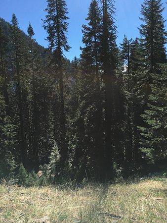 Mineral, Kalifornien: Meadow.