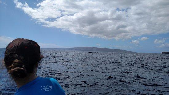 Blue Water Rafting: Blue Water Molokini Whale Watch (snorkel trip)