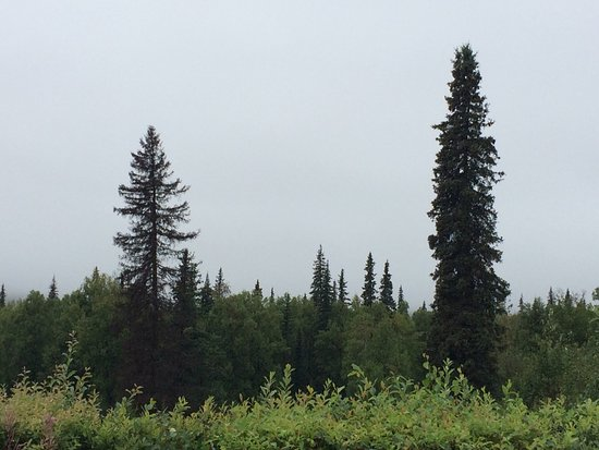Mary's Mckinley View Lodge: Denali hidden behind the clouds