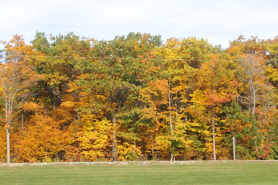 Beautiful Autumn View Near Hotel Picture Of Quality Inn