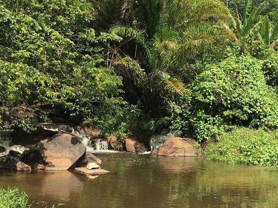 Boca da Mata, AL: photo4.jpg