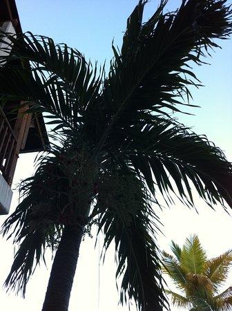 Фотография Club Med Turkoise, Turks & Caicos