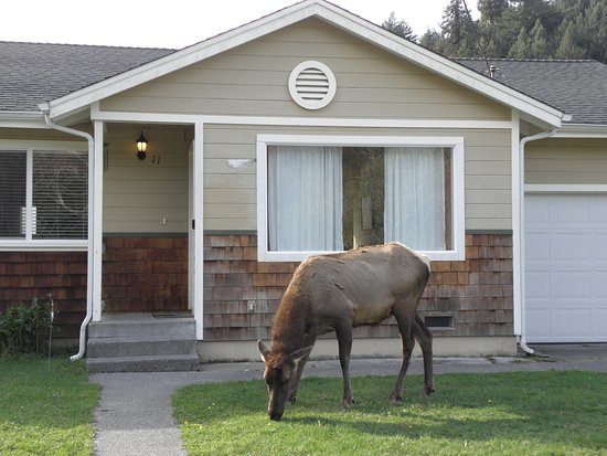 Elk Meadow Cabins Photo