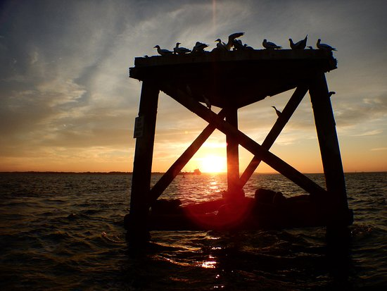 Blairgowrie, Australia: Seal haul-out and Gannet resting platform, Port Phillip Bay