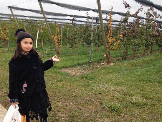 Chavannes-de-Bogis, Suíça: Arbres fruitiers pres de L Hotel