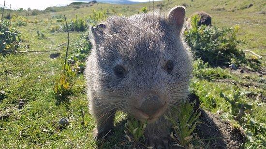 Tasmania, Australia: 20161014_160107_large.jpg