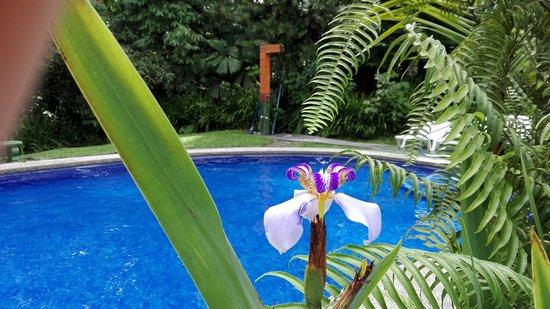 Catarata Eco Lodge S.A: IMG_20161030_122344_large.jpg