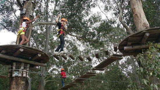 TreeTop Adventure Park Western Sydney: 9337_large.jpg