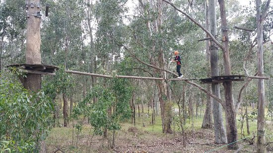 TreeTop Adventure Park Western Sydney: 9355_large.jpg