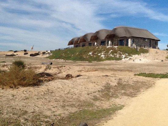 Cape Team Tours - Day Tours: Safari tour