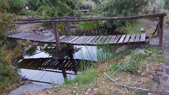 Roccatederighi, Italy: A quaint little pond.