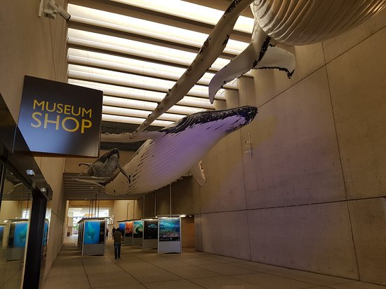 Foyer Museum Queensland : Entrance on first floor picture of queensland museum