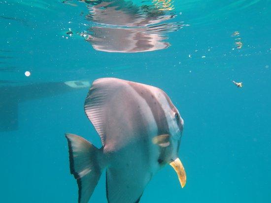 Reef Daytripper: IMG_2423_large.jpg