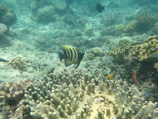 Reef Daytripper: IMG_2399_large.jpg