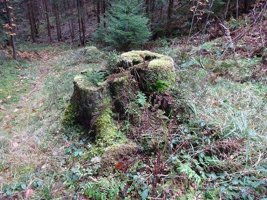 Puchenstuben, Austria: Unberührte Natur.