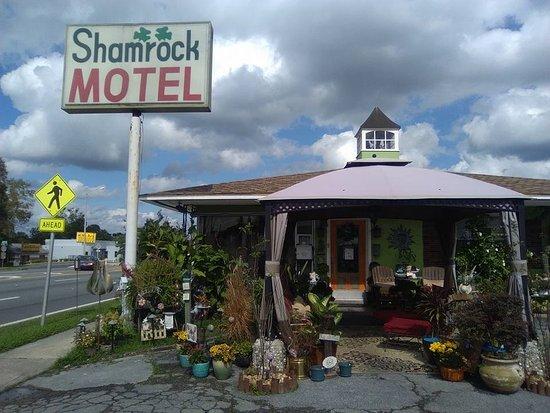 Фотография Shamrock Inn