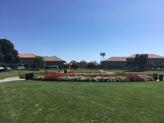Palo Alto, CA: スタンフォード大学 芝広場からの景色