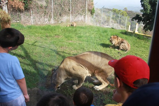 Selwo Aventura: Feeding the lions